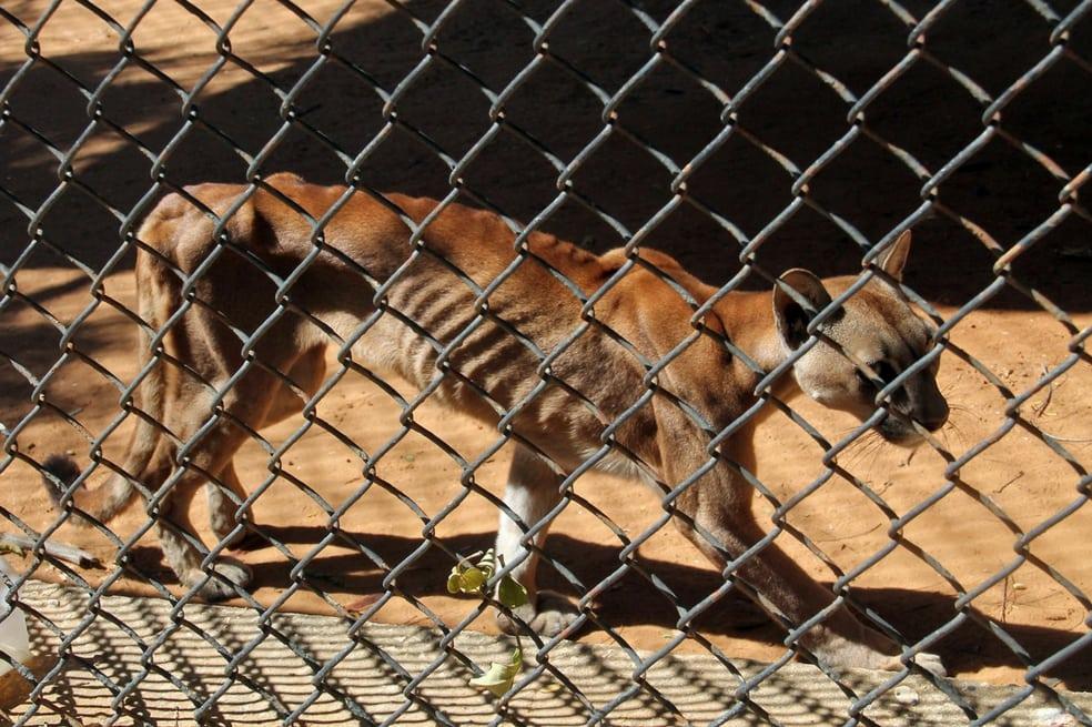 Animales de un zoológico de Venezuela mueren de hambre tras la crisis