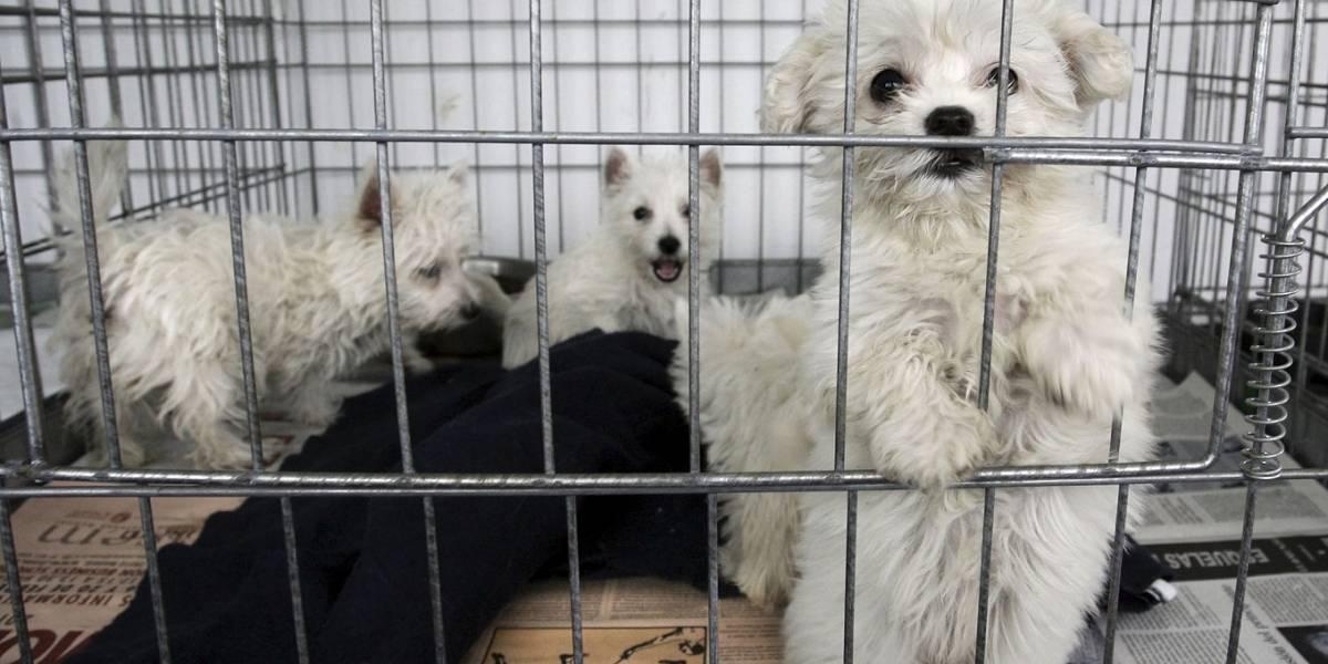 Facebook prohibió la comercialización de animales en sus plataformas