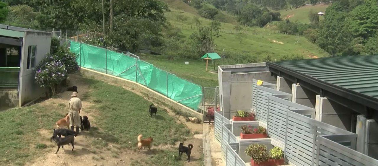 Medellín es pionera en atención a animales maltratados