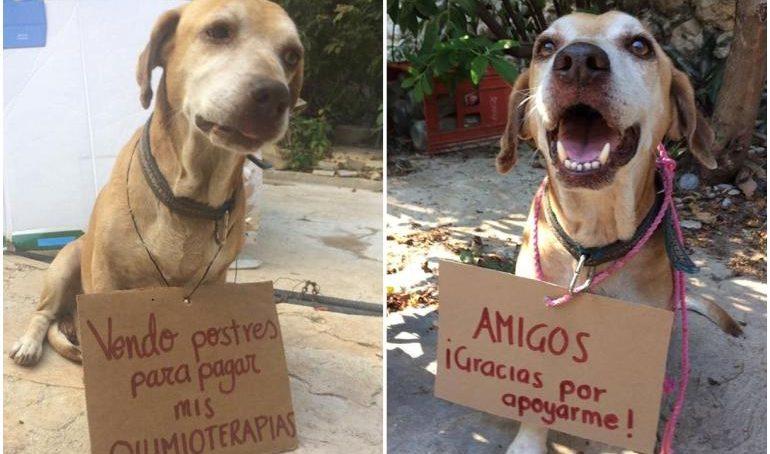 Deko, el perro que vendió postres para pagar sus quimioterapias