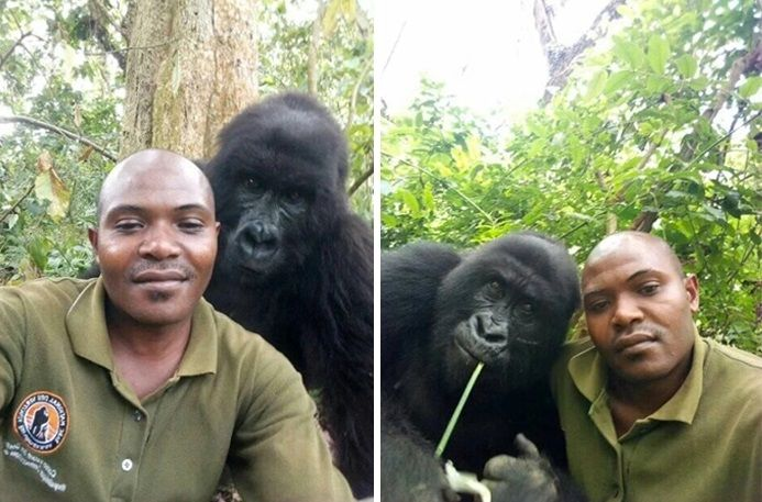 Gorilas que saben posar para las fotos, son sensación en redes sociales