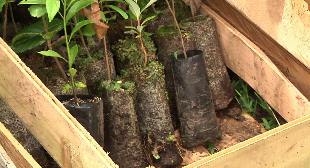 Medellín retomó siembra de árboles y mantenimiento de jardines
