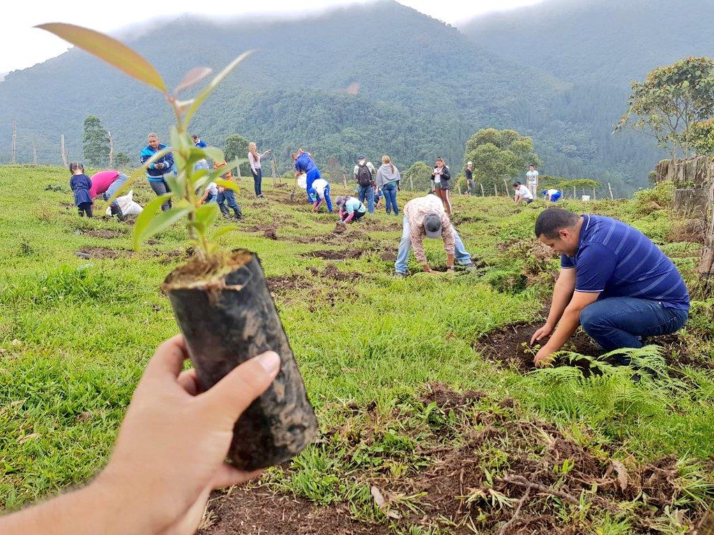 "100.000 árboles serán plantados en la Sembratón ""Bosques de Vida"""