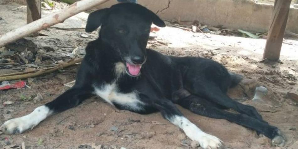 Un perro rescató a un bebé que había sido sepultado con vida