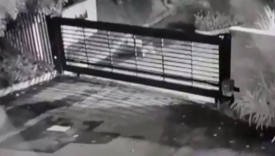 Fue avistado un puma en un sector residencial de Envigado