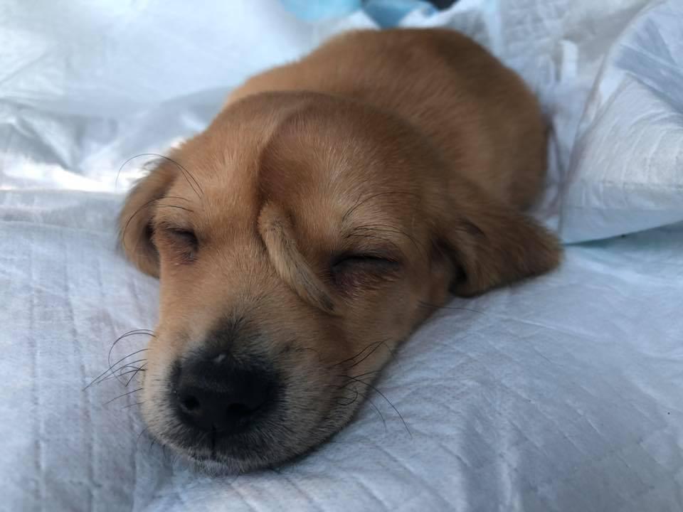 Narwhal, el cachorro que nació con una colita en su frente