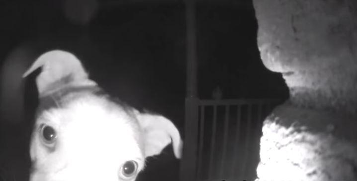 (Video) Este perrito timbró en su casa para avisar que lo dejaron por fuera