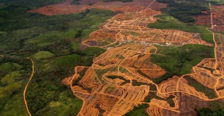 Fiscalía imputó a alcaldes en Guaviare por deforestación del Amazonas