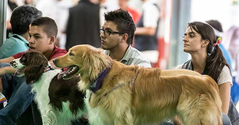 Estos son los requisitos para viajar con su mascota en el Metro de Medellín
