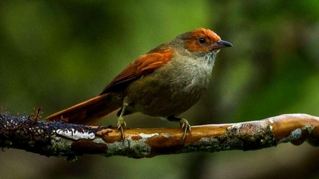 Encontraron un nuevo tipo de ave en el Alto de San Miguel
