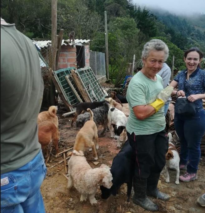 Buscan ayuda para encontrar un hogar a 200 perros en Medellín