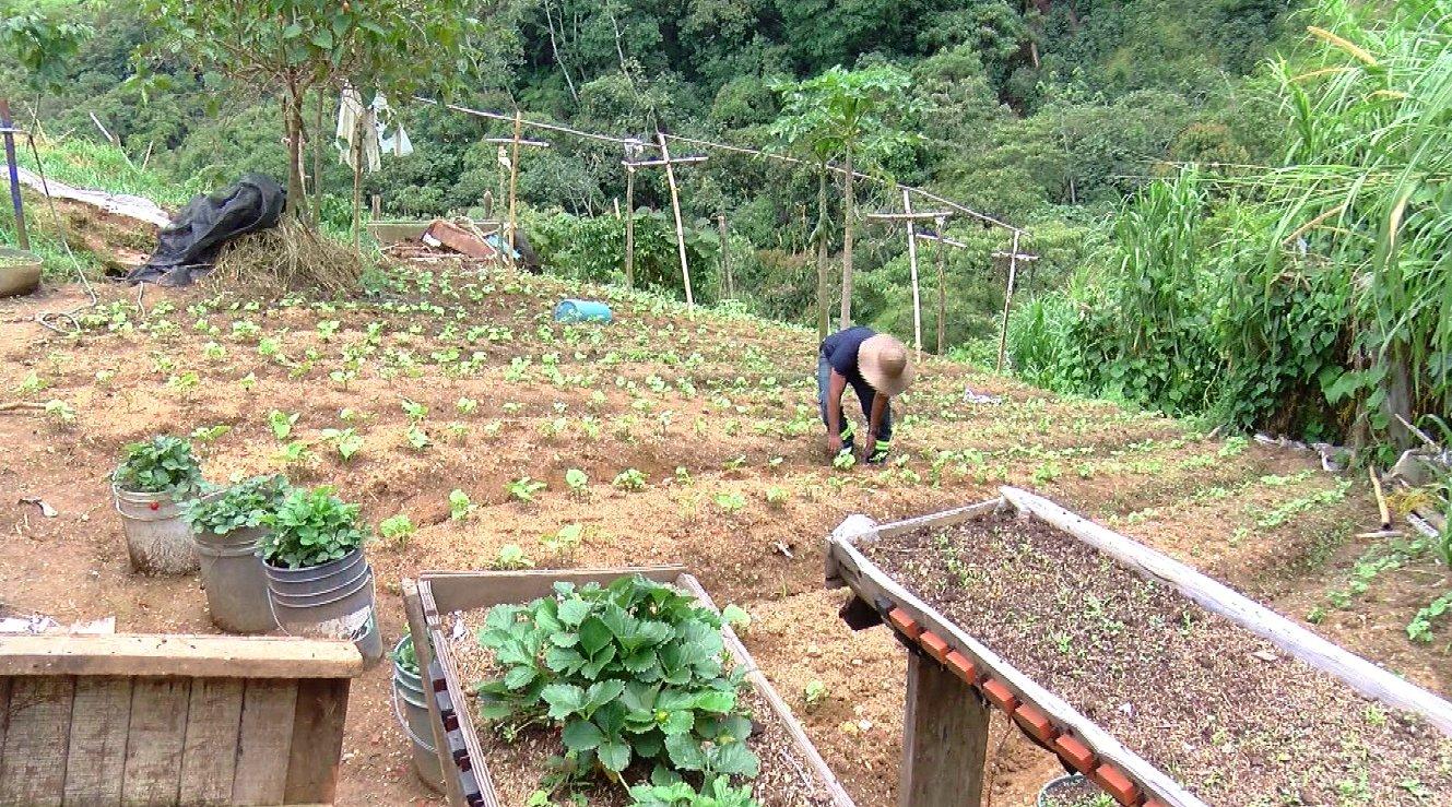 En un 16 % aumentaría el precio de las hortalizas por la temporada de lluvias