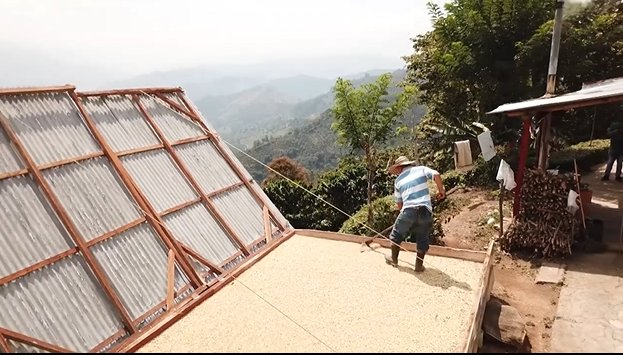 Cerca de 650 recolectores de café se han inscrito en Fredonia