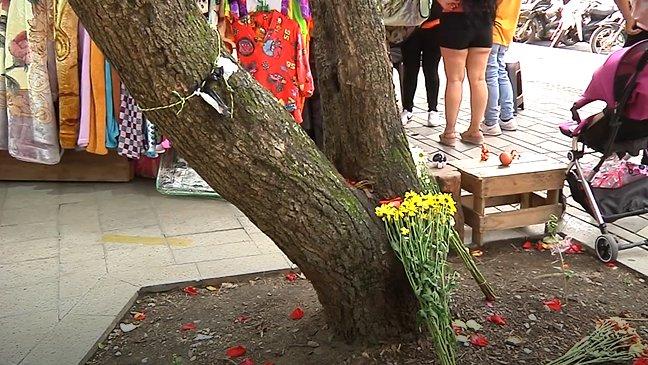 Nueve árboles enfermos serán talados en Medellín