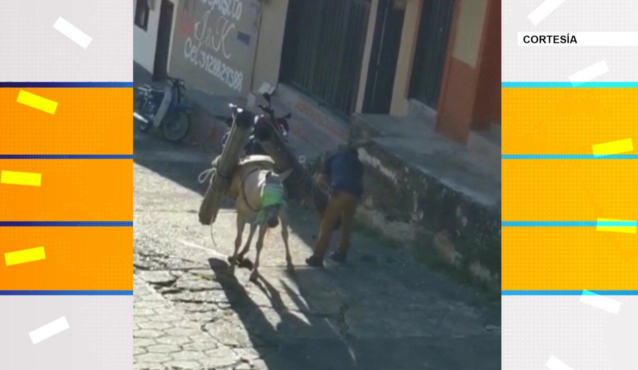 Se registra un segundo caso de maltrato animal en menos de 24 horas en Antioquia