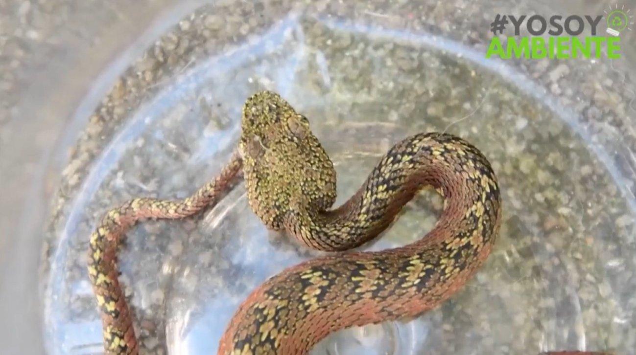Preocupa hallazgo de serpiente en una vivienda en Guatapé