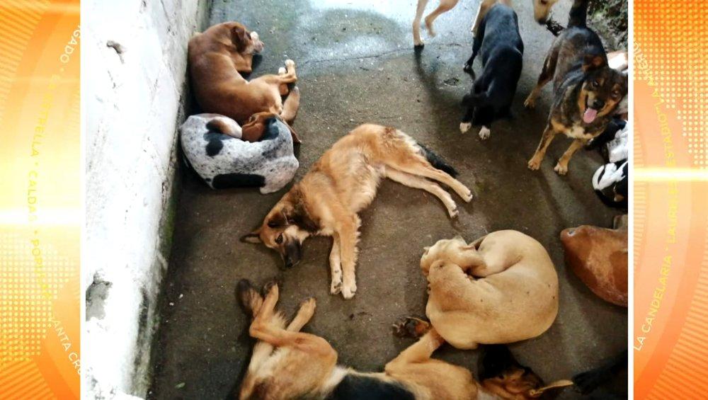 400 mascotas en Dabeiba y Urrao recibirán atención veterinaria