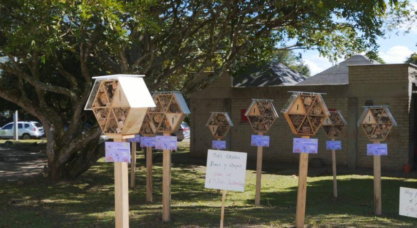 """""""Hoteles para abejas"""" la iniciativa del Área Metropolitana que busca preservar esta especie"""