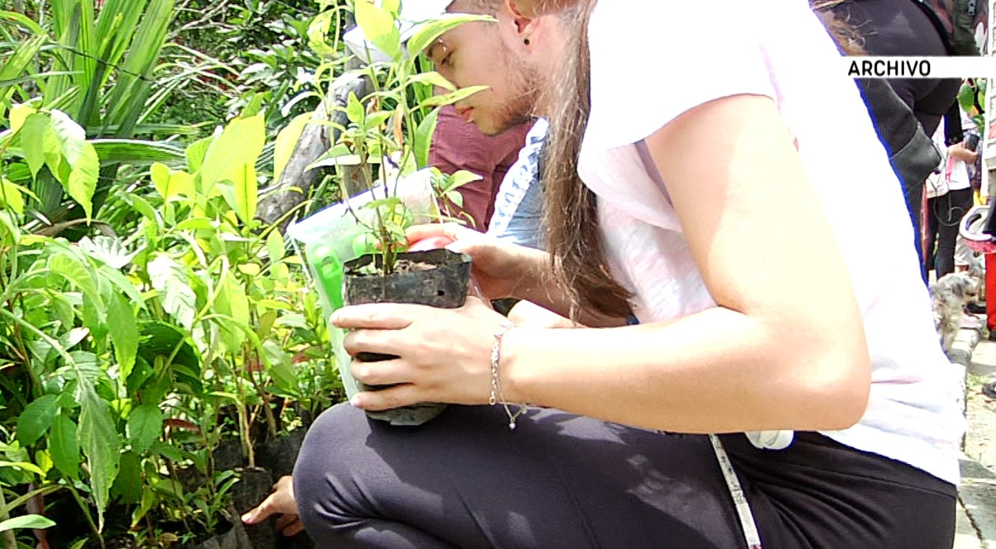 Día del Árbol para sensibilizar en la protección de superficies arboladas