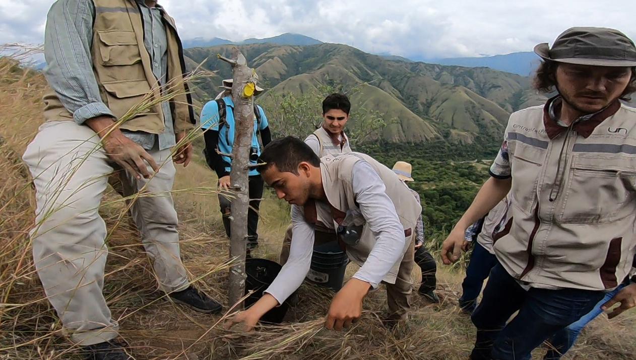 EPM ha sembrado más de 60 mil árboles en la zona de influencia de Hidroituango