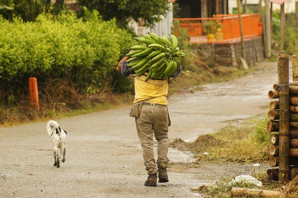 Campesino en Ituango no quiso irse de sus tierras para no abandonar a sus animales