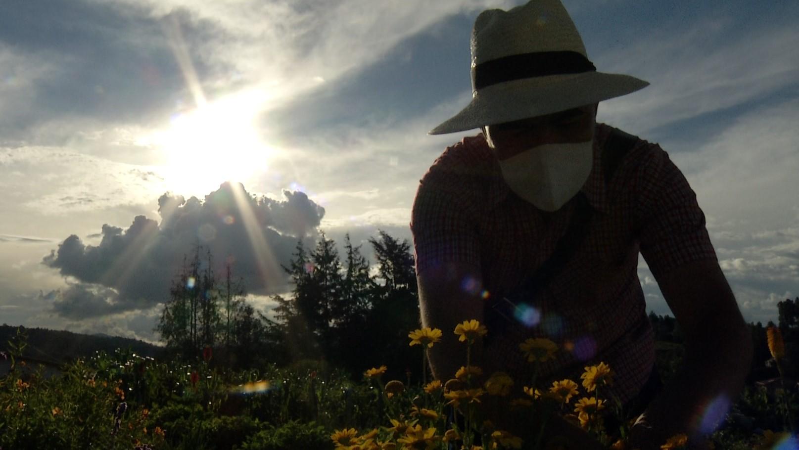 Vuelven los recorridos turísticos por las fincas silleteras