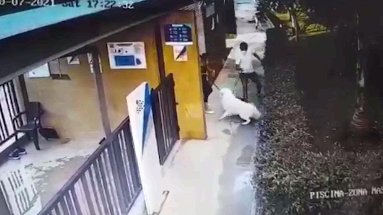 (Video) Hombre atacó brutalmente a un perro porque mordió su mascota
